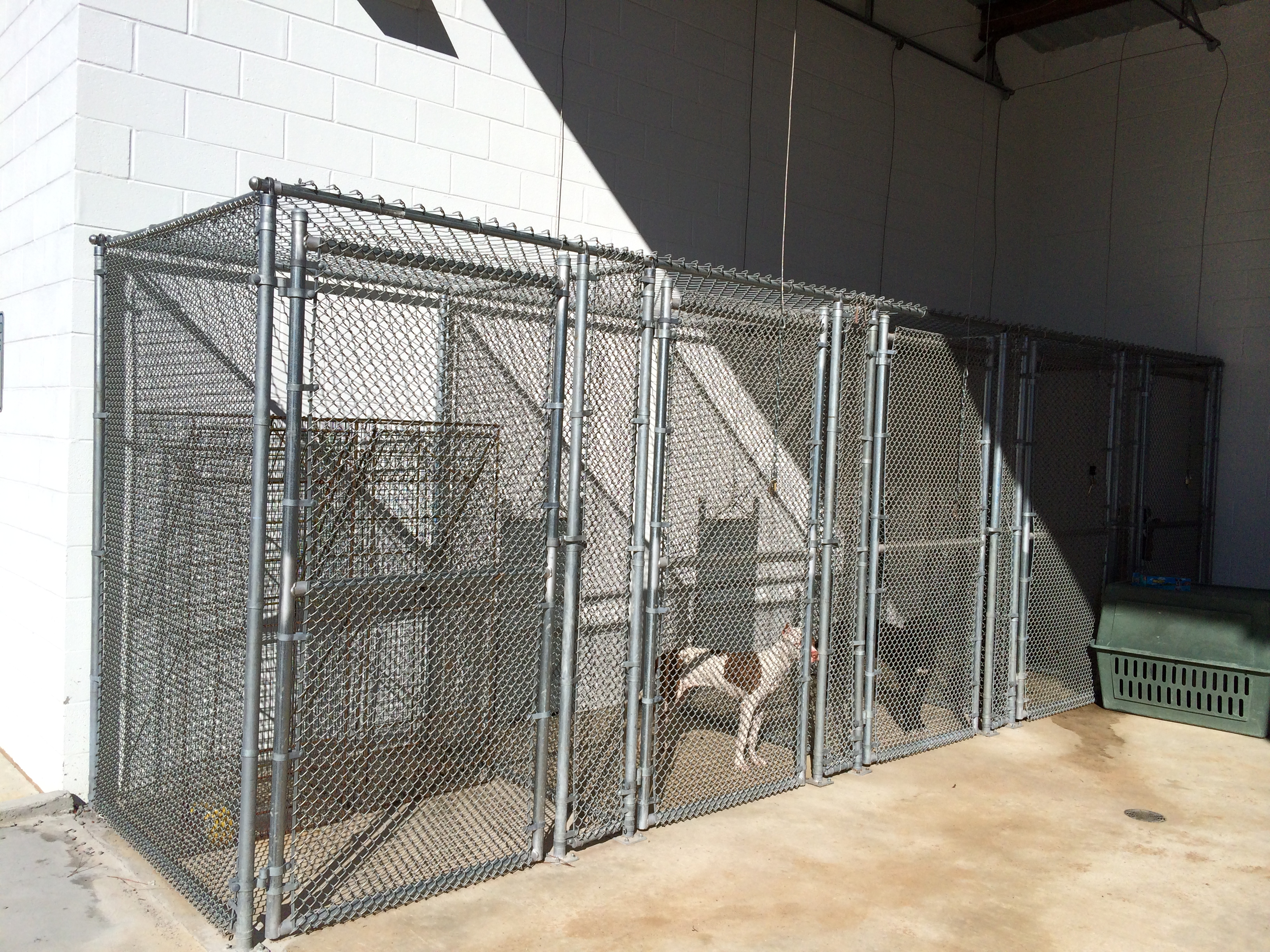 Outside view of Shelter cages